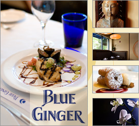 blue-ginger[1]